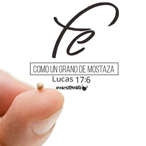 fe-mostaza